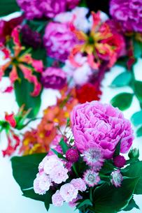 花(シャクヤク バラ アストランティア グロリオサ)の写真素材 [FYI03919379]
