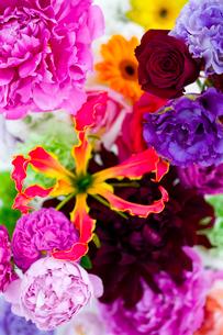 花(ダリア シャクヤク バラ グロリオサ ガーベラ 他)の写真素材 [FYI03919387]