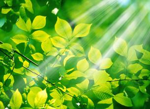 新緑の写真素材 [FYI03920276]