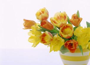 花の写真素材 [FYI03920320]
