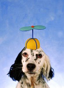 帽子を被った犬の写真素材 [FYI03920358]