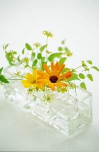 花瓶の花の写真素材 [FYI03921093]