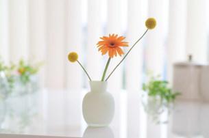 花瓶の花の写真素材 [FYI03921096]
