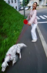 犬の散歩の写真素材 [FYI03921107]