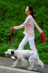 犬の散歩の写真素材 [FYI03921108]