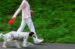 犬の散歩の写真素材 [FYI03921109]