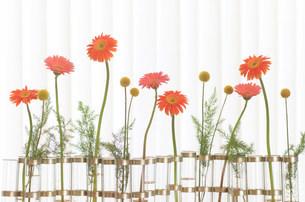 花瓶の花の写真素材 [FYI03921183]