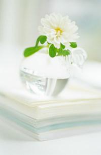花瓶の花の写真素材 [FYI03921267]