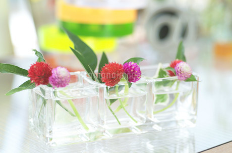 花瓶の花の写真素材 [FYI03921304]