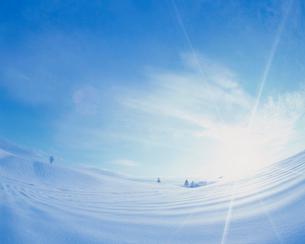 雪原と木立の朝景の写真素材 [FYI03921923]