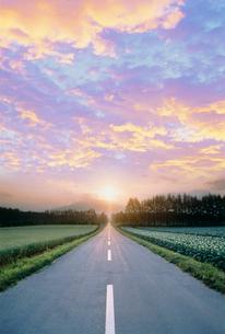 道路とジャガイモ畑と防風林の写真素材 [FYI03921957]