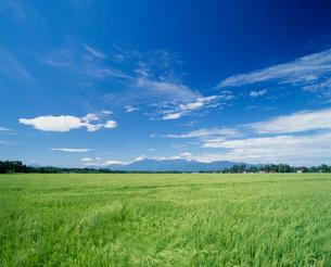 夏の田園風景と妙高山の写真素材 [FYI03921983]