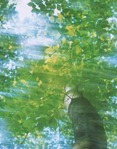 ぶなの木の写真素材 [FYI03922225]