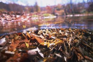 清流の水中写真の写真素材 [FYI03922348]