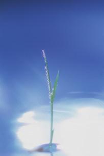 苗のイメージの写真素材 [FYI03922359]