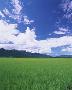 夏の田園の写真素材 [FYI03922648]