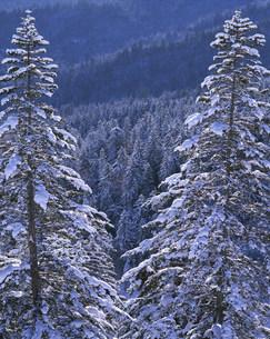樹氷の写真素材 [FYI03922674]