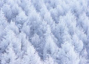 霧氷と唐松の写真素材 [FYI03922701]