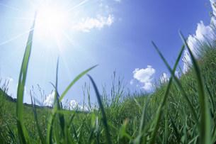 草原と太陽の写真素材 [FYI03922875]