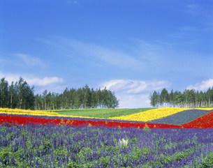 四季彩の丘の写真素材 [FYI03923032]