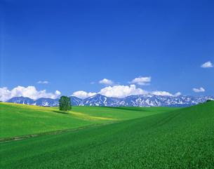 草原と青空の写真素材 [FYI03923085]