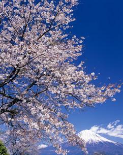 富士山の写真素材 [FYI03923197]