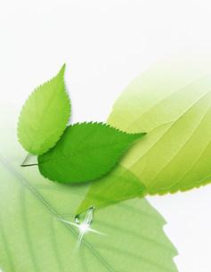 植物 CGのイラスト素材 [FYI03923272]