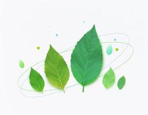 植物 CGのイラスト素材 [FYI03923277]