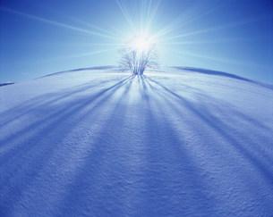 光を受ける雪の中の木の写真素材 [FYI03923342]