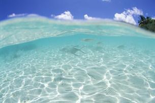 青空と小波と魚の写真素材 [FYI03923462]