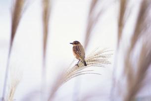 鳥の写真素材 [FYI03923511]