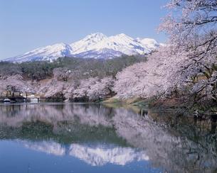桜咲くいもり池と妙高山の写真素材 [FYI03923702]