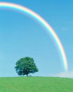 木立と虹の写真素材 [FYI03923873]