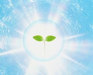 光と新芽のイメージ CGのイラスト素材 [FYI03923884]