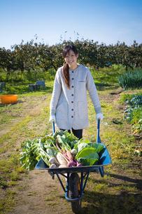 一輪車で収穫した野菜を運ぶ20代の女性の写真素材 [FYI03924237]