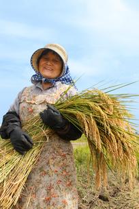 コシヒカリの稲を持つ農家の女性の写真素材 [FYI03924269]