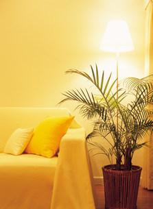 ソファーと観葉植物の写真素材 [FYI03924341]