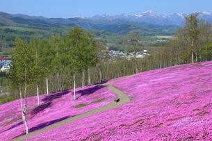 芝桜が咲く滝上公園の写真素材 [FYI03924888]