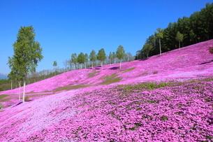 芝桜が咲く滝上公園の写真素材 [FYI03924890]