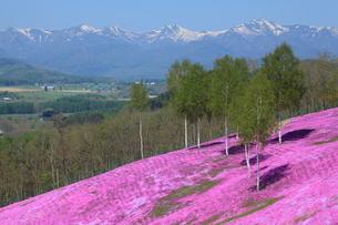 芝桜が咲く滝上公園の写真素材 [FYI03924892]