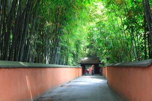 竹林の道の写真素材 [FYI03924899]