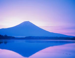 富士山と田貫湖の写真素材 [FYI03924908]