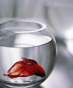 熱帯魚と水槽の写真素材 [FYI03924915]