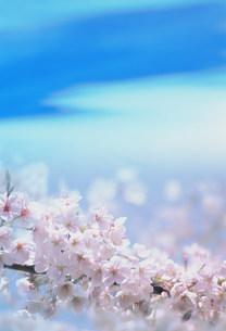 花の写真素材 [FYI03925271]