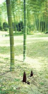 竹の写真素材 [FYI03925273]