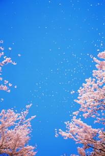 花と空の写真素材 [FYI03925274]