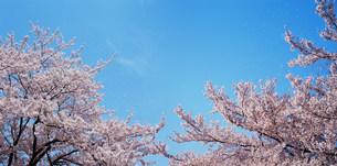 花と空の写真素材 [FYI03925275]