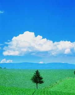 空と草原と木の写真素材 [FYI03925350]