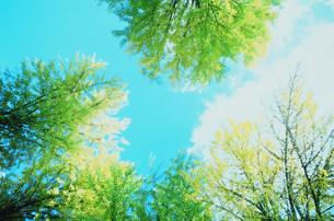 木々の写真素材 [FYI03925392]