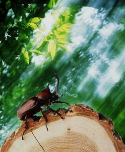 虫の写真素材 [FYI03925407]